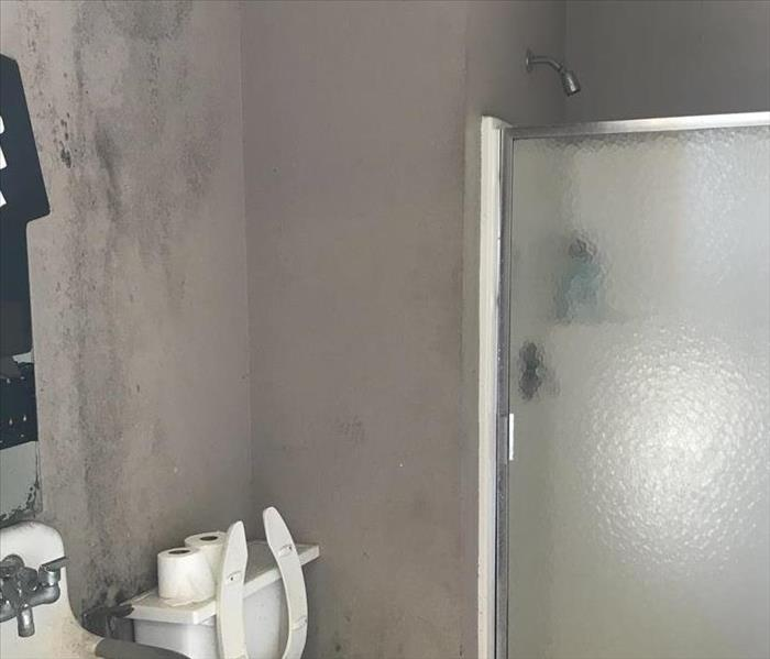 Mold Remediation in Bathroom